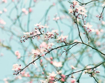 Nature photography, Blossom, Spring, Tree, Pink, Blue, Wall Art, Home Decor.