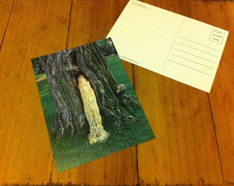 The Love Making Tree - Post Card