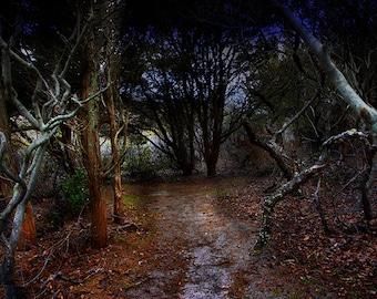 Dark Forest in Fire Island, New York. Fine Art Photography by Roy Hsu