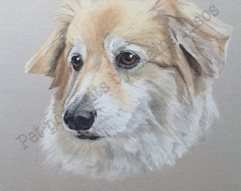 Original Pet Portraits in pastel
