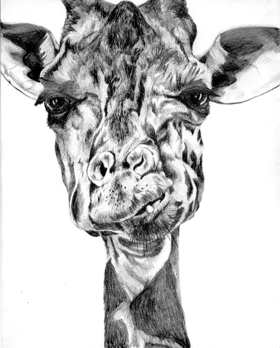Items similar to Giraffe Eating, Original Pencil Drawing ... Cool Giraffe Drawing