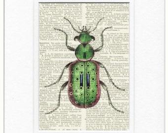 Ground Beetle II page print