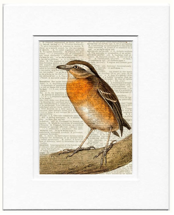 Hooded Gnateater female dictionary page print