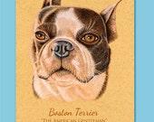 Boston Terrier ACEO ATC