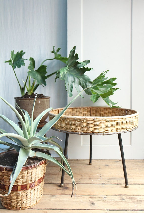 mid century wicker planter albini style wicker plant. Black Bedroom Furniture Sets. Home Design Ideas