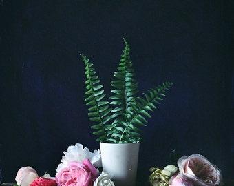 Flower Photograph No. 88248