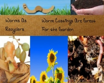 How To Raise Worms