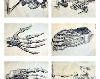 Digital Instant Download ATC Vintage Human Anatomy Bones Creepy Collage Sheet  ACEO Backgrounds , Printables, Collage Sheet