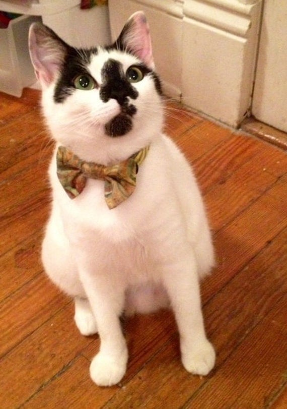 Batik Cat Break Away Bow Tie Collar