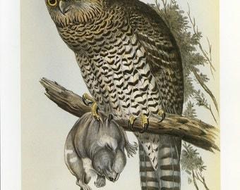 CLEARANCE Vintage Owl Book plate John Gould