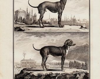 1766 Antique gorgeous TURKISH DOG engraving , 247 years old rare print