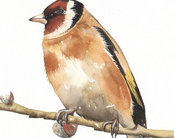 Watercolor Original Painted Art Bird - Gold Finch on pussy willow- by Lorisworld (10 x 8)