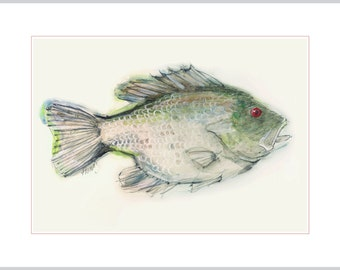 Fish Art Reproduction - Red Eye Rock Bass from a Farm Pond in Upstate New York - Print from Original Art