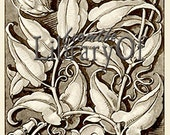 Botanical - ADHESIVE Personalized Bookplate - Vingate - Anton Seder - 1890 Vine And Floral Design- Very detailed Drawing -