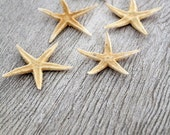 Star Fish / vintage starfish collection / 3 inch