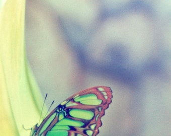 Butterfly Photography Print