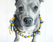 "For 2 Custom Pet Portraits - Original Portraits in Color Pencil - 5"" x 7"" - (reserved for Keegan only please)"