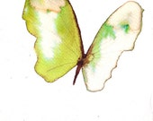 bright  spring green butterfly with white. original watercolor painting