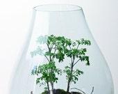 Forest Terrarium // live moss // lichen branches // large teardrop vase