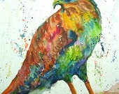 Falcon,  Fine Art Giclee Print - enhanced with Acrylic  Paint Brush strokes on Canvas Sheet from my Painting - ebsq Artist Ricky Martin