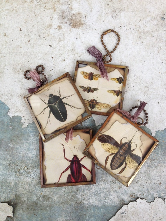 Insect ornaments oddities curiosities victorian Oddities home decor