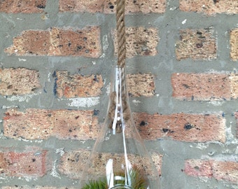 Urban Chic Hanging Glass Droplet with Sisel Rope Air Plant and Moss Terrarium - A Unique Valentines day or Mothers Day Gift