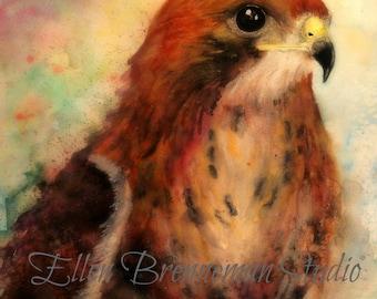 Red shouldered hawk watercolor fine art print by Ellen Brenneman