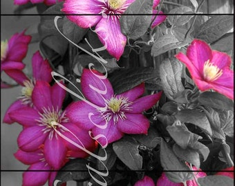 Pink Flowers Photographs, 3 piece set, Fine Art Photography Pink Clematis Flower Prints, Home or Office Wall Art Decor, pink flowers photos