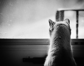 Black and White Animal Photography - Curiosity - 8x12 fine art print - cat feline animal monochromatic wall art home decor