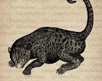 Big Cat Hunting - Leopard - Black Panther - Printable Graphics Digital Collage Sheet Image Download  Transfer  Textile An77