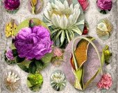 Luscious Flowers - 30x40mm  ovals - Digital Collage Sheet (062) - instant download