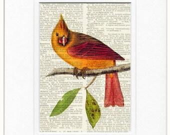 Bird, cardinal grosbeak print