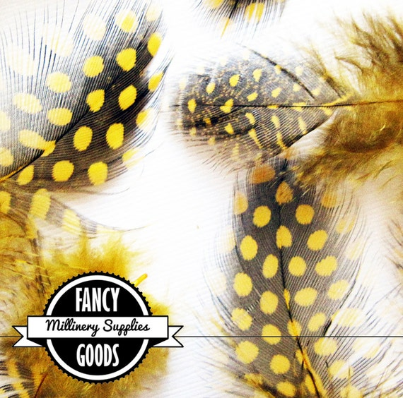 20 - Black / Gold - Yellow - Guinea Feathers