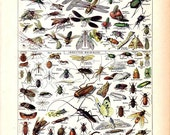 """Vintage Natural History Print """"Insectes"""" Insect Collection Antique Print - Bugs Butterflies Moths - French Vintage Print"""