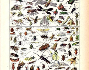 "Vintage Natural History Print ""Insectes"" Insect Collection Antique Print - Bugs Butterflies Moths - French Vintage Print"