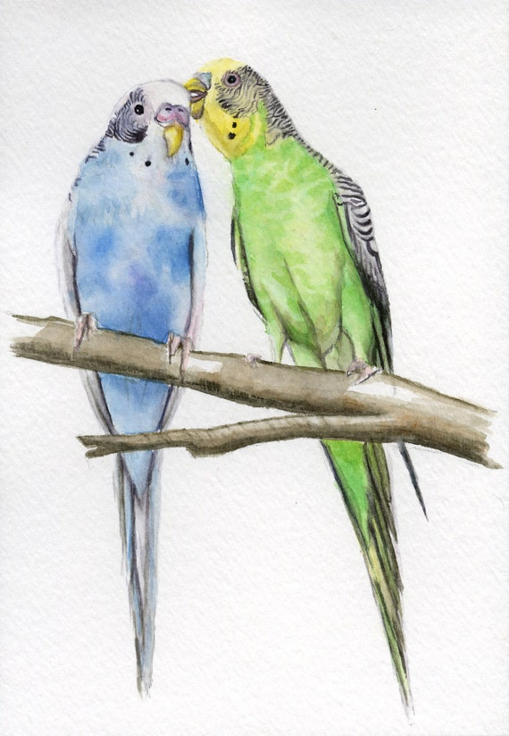 Parakeets, budgie painting 5x7 PRINT from original watercolor, art & collectibles erthspalette