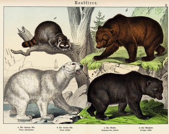 1886 Gorgeous BEARS fine chromolithograph, American bear, grizzly bear, arctic bear and a raccoon. 126 years old large print