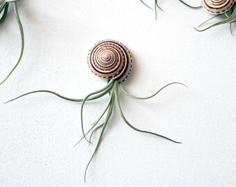 jellyfish friend no.1 // air plant  // by robincharlotte