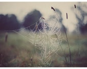 Nature Photography - Spider Web  - Fine Art Photograph - Green - Dew - Raindrops - Web 1 - Autumn Art - Field