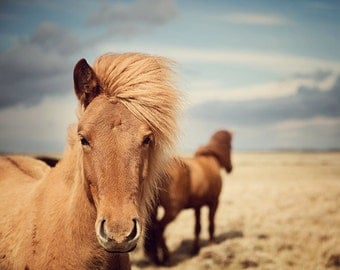 Horse Photography, Icelandic Horses, Golden Brown, Rustic Nature, Horse Decor, Blue Sky, Equine - Outlaws