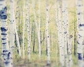 Tree Photography, Birch Tree Art, Landscape Photography, Tree Photo, Woodland Art, Tree Photograph, Tree Print