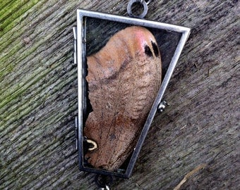 Moth Wing Specimen Coffin Shaped Glass Locket Necklace