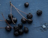 Dried wild cherries, photography - emmarts