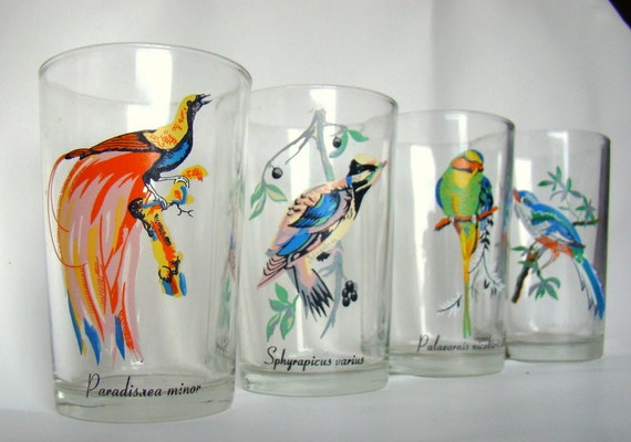 Vintage Scientific Name Bird Juice Glasses - Set of Four (4)