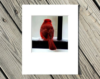 Bird Photo, Red, Nature Picture, Animal Photograph, Grey, Black, White, Winter - 5x5 inch Print matted to 8x10 inches-Cardinal in The Snow