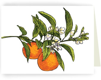 Two Mandarin Oranges on Branch:  Boxed Set of 8 Blank Greeting Cards