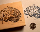 Human brain-anatomy rubber stamp WM P27