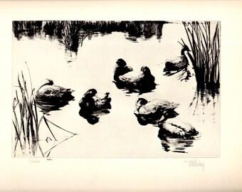 "1930s ""SIESTA"" No.22 Richard Bishop Duck Wildlife Art Vintage Print , Birds Duck Hunting Wildlife Art Natural History"
