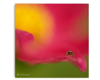 Jumping Spider Print 10X10 Arachnid Photograph Woodland Forest Flower