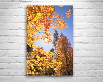 Catalina Mountains, Tucson, Forest Art, Nature Photography, Autumn Leaves, Fall Leaves, Fall Leaves, Leaf Art, Maple Leaf Art